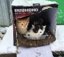 Жители поселка Заокский приняли коробку с котятами за бомбу