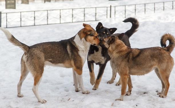 Ветеринарную лечебницу «Любимец» обвиняют в жестоком обращении с животными