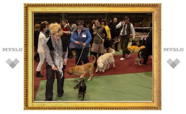 На выставке в Туле выбирали лучших из 500 собак
