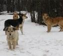 Тульское отделение ОНФ: «Нужно уделить особое внимание проблеме бродячих собак»