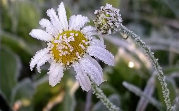 В Центральной России ожидаются ночные заморозки до -2 градусов