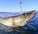 В Тульской области изменились правила рыбалки