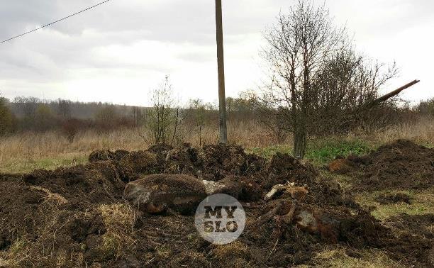 Массовая гибель скота в Тульской области: животные постепенно умирали от голода