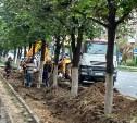 Варварское благоустройство: в Туле дорожные рабочие обрубают корни деревьев