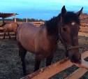 С фермы в Ясногорском районе украдены три лошади