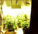 В Донском местный житель выращивал марихуану в туристической палатке