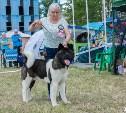 Туляков приглашают на Всероссийскую выставку собак