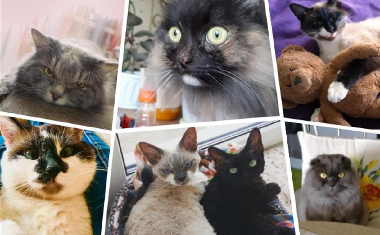 «Иди уже на работу!»: как тульские коты переживают самоизоляцию хозяев