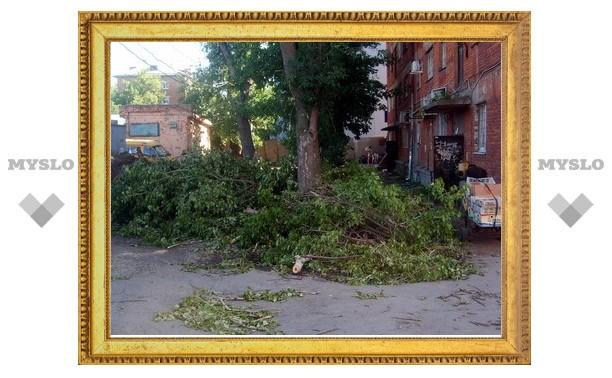 В Туле жильцы дома стали заложниками упавшего дерева
