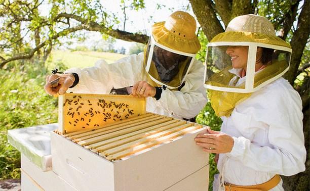 В России предложили сделать 14 августа Днём пчеловода