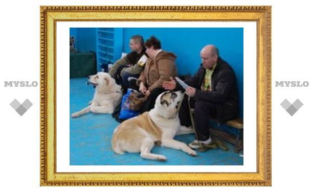 Сразу две выставки собак проходят сегодня в Туле