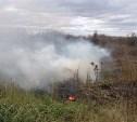 Тульские полицейские сожгли более 3 тысяч кустов конопли