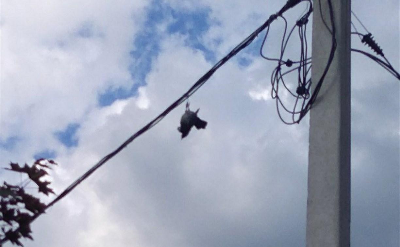 В Новомосковске птица повисла на проводах и была спасена: видео