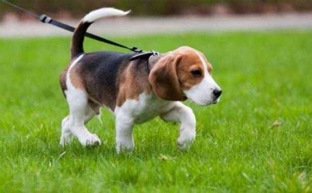 В Новомосковске откроется площадка для выгула собак