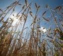 В Тульской области погибло 10% урожая