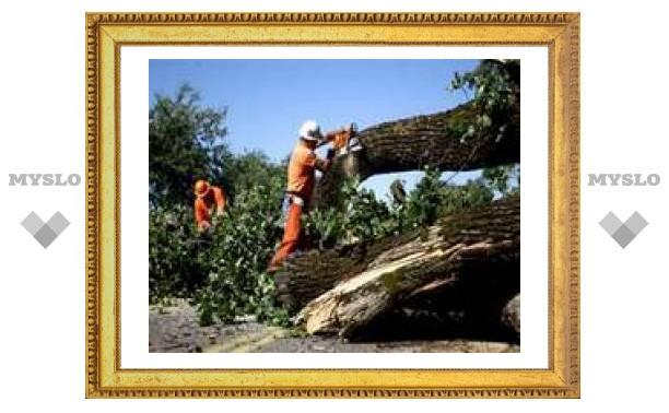 Почему в Липках вырубают деревья?