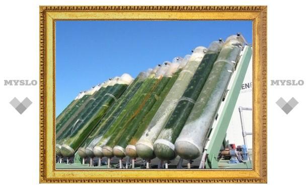 У Тульской торгово-промышленной палаты есть виды на биотопливо