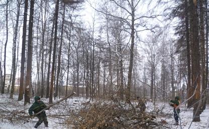 Возле поселка Горелки появится зона отдыха