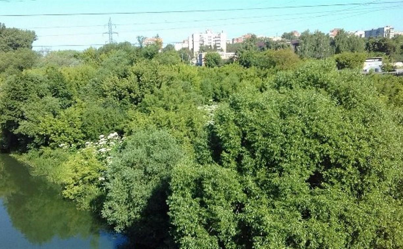 Заросли борщевика рядом с Восточным обводом ликвидируют 22 июня
