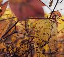 Погода в Туле 15 октября: ветрено, дождливо и прохладно