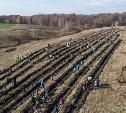 На Куликовом поле высадили 6000 двухлетних дубков