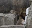 По вопросу истребления крыс возле троллейбусного кольца на Зеленстрое создана рабочая группа