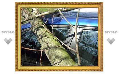Житель Тулы отсудил у властей 130000 рублей за упавшее на машину дерево