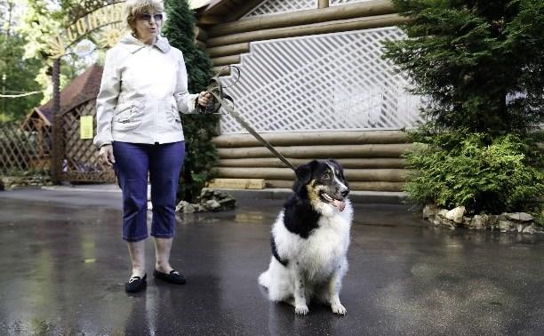 Тулякам предлагают выбрать места для выгула собак
