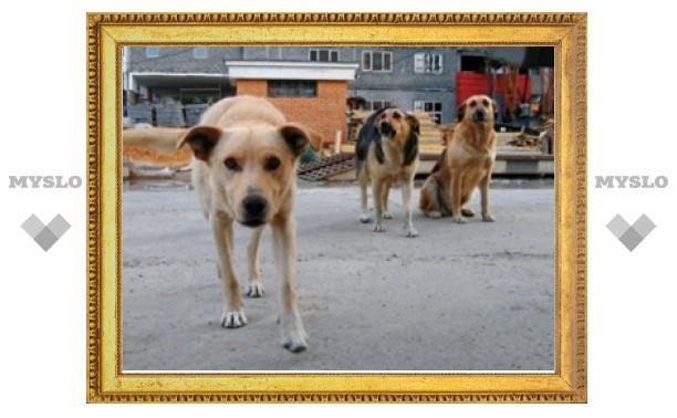 В Болохове будут отлавливать бродячих собак