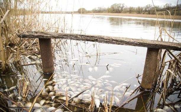 Экологическая катастрофа в Тульской области: реку отравили фермеры?