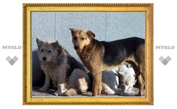 """Тульских собак хотят сделать """"киборгами""""?"""