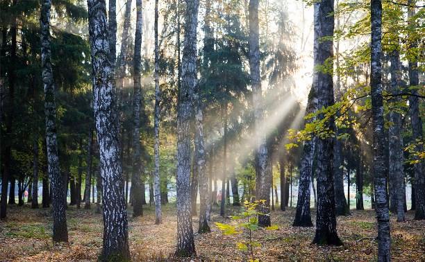 ОНФ будет бороться с незаконной вырубкой лесов в Тульской области