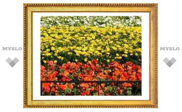 В Туле посадят полтора миллиона цветов