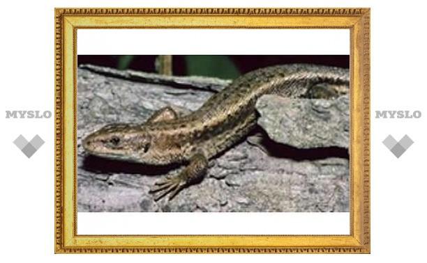 Земным рептилиям предсказали скорое вымирание