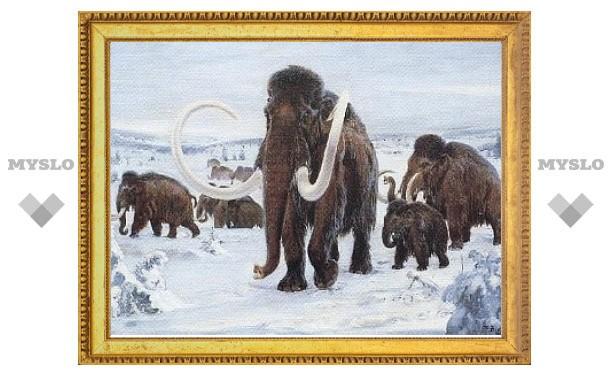 На Урале обнаружили древний череп мамонта