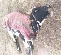 Из-за гибели животных в деревне под Тулой введен карантин