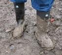 На тульской перепелиной ферме не нашлось кюветов для обуви