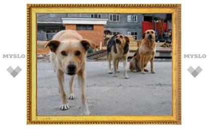 На тулячку напали бродячие собаки