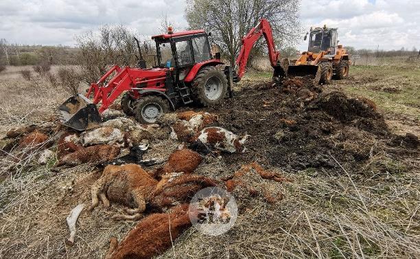 Что творится на месте массовой гибели скота в Тульской области: фоторепортаж Myslo