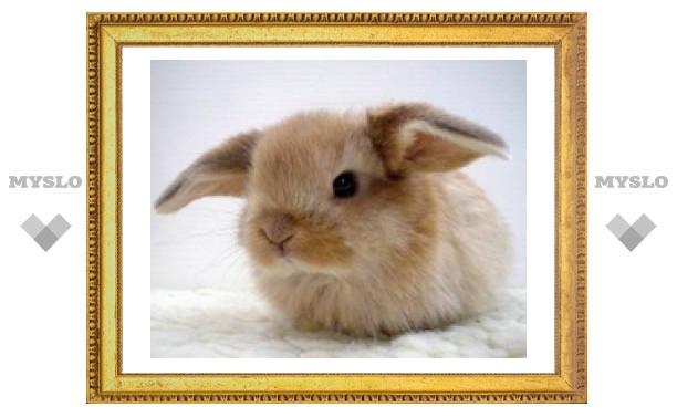 В Туле выберут самого красивого кролика