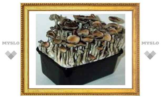 """В Нидерландах вступил в силу запрет на продажу """"магических грибов"""""""