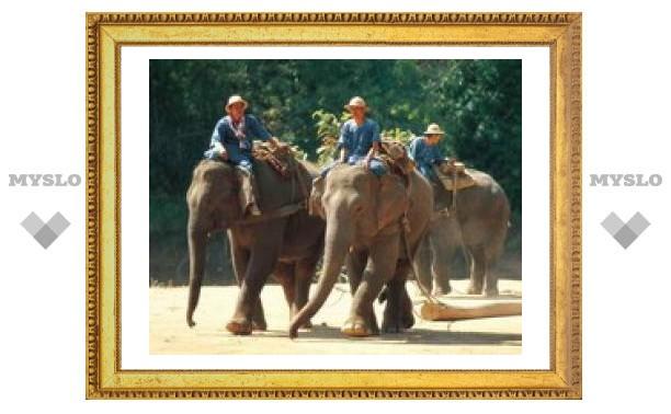 Тулякам не рекомендуют ехать в Таиланд