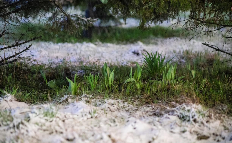 Апрельский снегопад в Туле: фоторепортаж