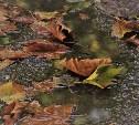 Погода в Туле 3 ноября: сильный ветер и дождь