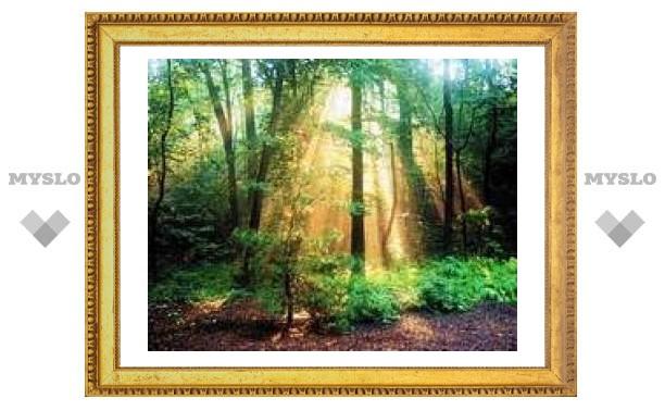 Лес вернули государству