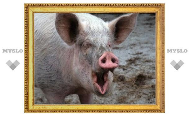 На тульской свиноферме выявлены грубые нарушения