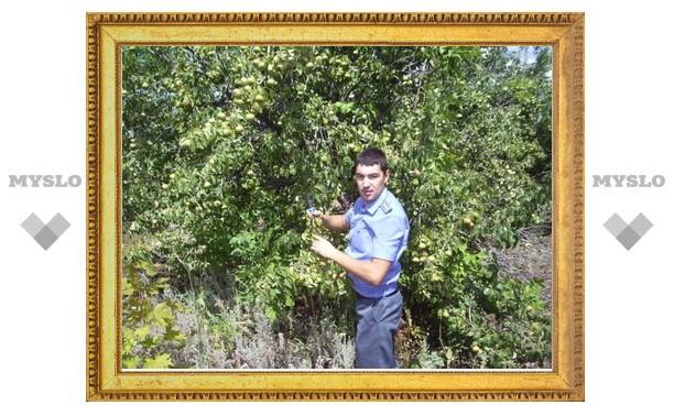 В Туле обследуют деревья