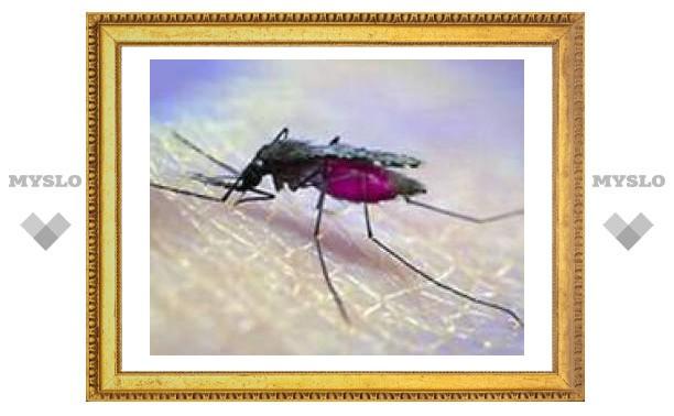 Разносчиков малярии победят трансгенные москиты