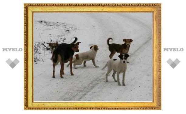 Каким быть питомнику для бездомных собак в Туле?