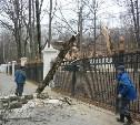 Из-за сильного ветра в Центральном парке упало несколько деревьев